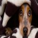 نکات مهمی که باید قبل از پذیرفتن مسئولیت سگها بدانید.