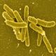 مطالعه مقاومت دارویی سالمونلاهای جداسازی شده ازتخممرغهای بومیشهرستان فسا (بخش اول)