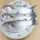 کاهش نرخ ماهی سفید و کفال در پی صید مناسب