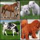 گران قیمت ترین و باارزش ترین حیوانات خانگی جهان