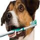 آشنایی با بیماری های دهان و دندان در سگ