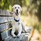 معرفی صمیمیترین و دوستانهترین نژادهای سگ