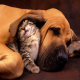 نکاتی درباره سگها و گربههای خانگی که باید بدانید