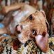 آشنایی با بیماری های عصبی در سگ ها