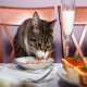 رژیم غذایی مناسب گربه ها