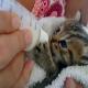نحوه نگهداری و تغذیه نوزاد گربه