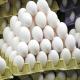 اختلاف قیمت تخممرغ از مرغداری تا مغازه