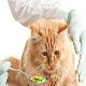 مسمومیت گربه ها با استامینوفن