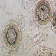 انگل تریکودینا در ماهی (Trichodina)