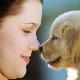 روش های کنترل جمعیت در حیوانات خانگی، عمر آنها را افزایش می دهد!