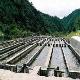 هشدار در مورد استفاده از پودر مالاشیت گرین