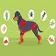 معرفی 10 گیاه دارویی برای تسکین درد در سگ (بخش اول)