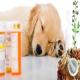 معرفی 10 گیاه دارویی برای تسکین درد در سگ (بخش دوم)