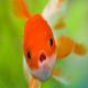 عجیب ترین رفتارهای دنیای حیوانات