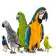 معروفترین طوطیها در ایران