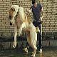 سگ نژاد  آلابای (Alabai)