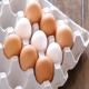 صادرات تخم مرغ ایران به صفر می رسد!