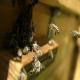 بیماری آکاریوز در زنبورعسل