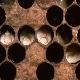 بیماری نوزاد گچی در زنبورعسل (Chalk Brood)