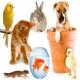 حیوانات خانگی چه بیماری هایی را همراه خود دارند؟