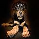 رایج ترین بیماری در سگ رتوایلر