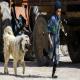 تاریخچه حضور سگ در زندگی انسانها