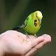 چگونه مرغ عشق را دستی کنیم؟