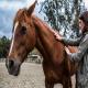 خصوصیات اخلاقی اسب ها