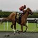 نکات بسیار ضروری برای اسبهای مسابقه