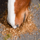 تغذیه اسب های مسابقه (بخش اول)