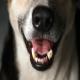 علت بوی بد دهان سگ