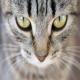 مراقبت از چشم سگ و گربه خانگی