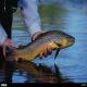 مدیریت تغذیه ماهیان سرد آبی