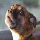 حکم شلاق برای سگ آزار