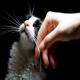 نظافت و تمیز کردن گربه