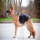 سگ ژرمن شپرد (German Shepherd Dog)