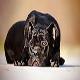سگ کین کورسو (Cane Corso)
