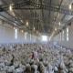 ناگفتههای مرغداران در هفته جهاد کشاورزی