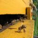 سندروم کاهش جمعیت زنبوران عسل (Honey Bee depopulation syndrome)