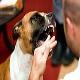 جلوگیری از گاز گرفتن سگ ها