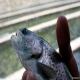 صدها تن ماهی قزلآلای آلوده در سفره ایرانیان