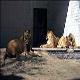 علت اصلی بوی بد باغ وحش تهران