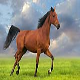 اسب نژاد موستانگ (mustang horse)