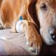 گاستریت (ورم معده) در حیوانات