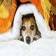 سرماخوردگی در سگ