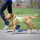نحوه صحیح پیاده روی سگ