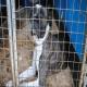 پیش نویس لایحه ممنوعیت حیوان آزاری در ایران آماده شد