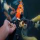 تغذیه در ماهیان آکواریومی