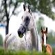 اسب نژاد ترسک (Tersk horse)