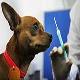 واکسیناسیون در سگ ها